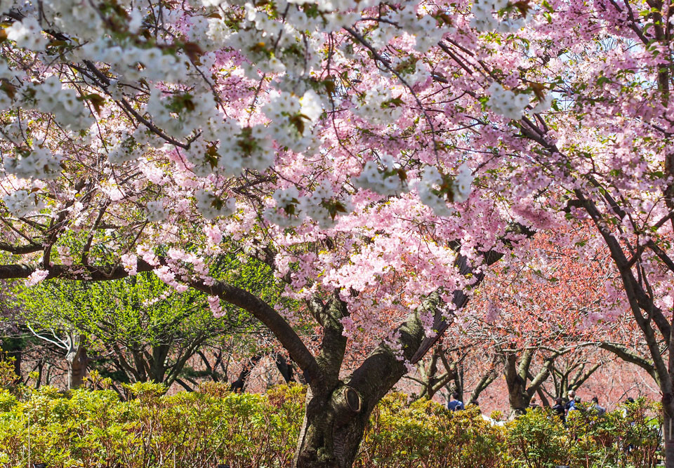2015---Sakura-Matsuri-(1-of-151)