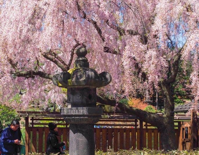 2015---Sakura-Matsuri-(100-of-151)