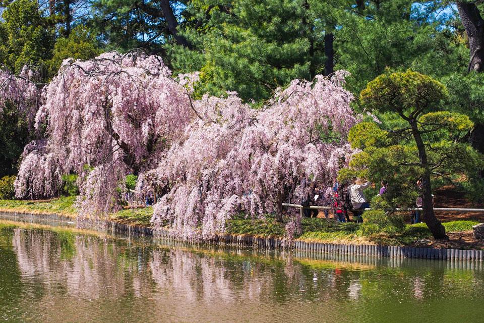 2015---Sakura-Matsuri-(105-of-151)