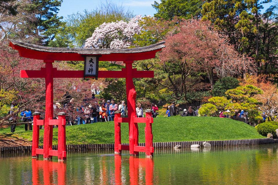 2015---Sakura-Matsuri-(106-of-151)
