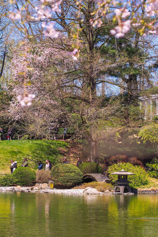 2015---Sakura-Matsuri-(110-of-151)