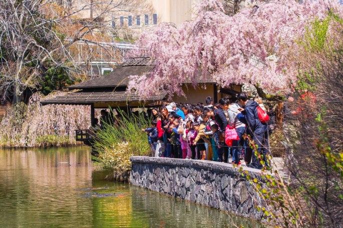2015---Sakura-Matsuri-(117-of-151)
