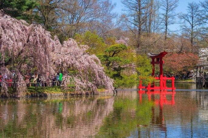 2015---Sakura-Matsuri-(129-of-151)