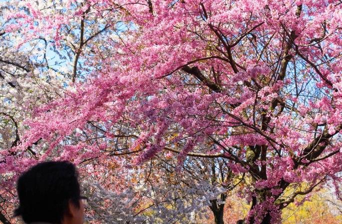 2015---Sakura-Matsuri-(21-of-151)