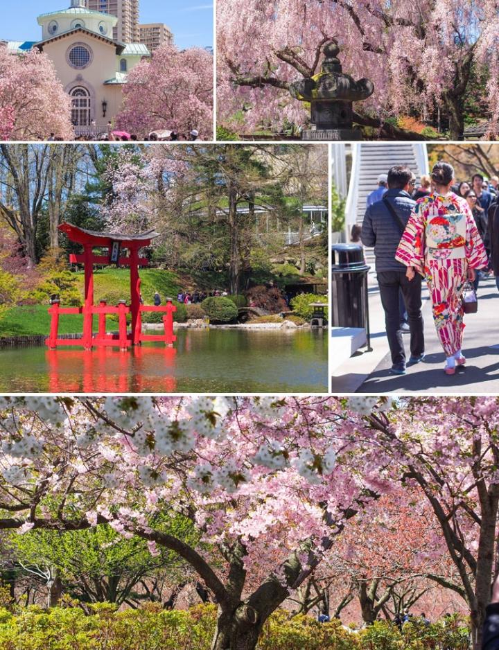 Brooklyn, New York : Sakura Matsuri2015